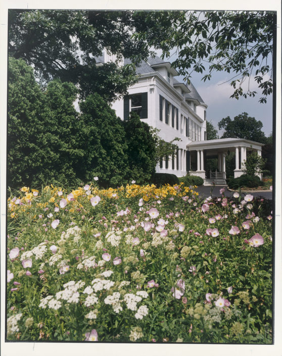 FULL BLOOM. The grounds of the residence include a healthy display of yellow Stella d'Oro daylilies and pink evening primroses. Number One Observatory Circle, the official home and residence of the Vice President of the United States. (Photographer: Oberto Gili). Text credit: Charles Denyer.