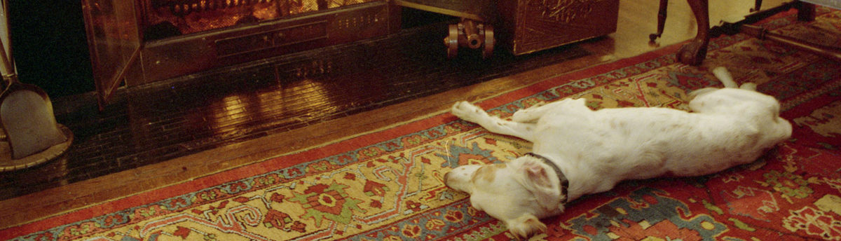 Canine Companion: The Quayles' dog Chili, keeping warm in front of the fire. Number One Observatory Circle, the official home and residence of the Vice President of the United States Photographer: Steven Purcell. Text Credit: Charles Denyer.